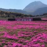 島原の芝桜公園
